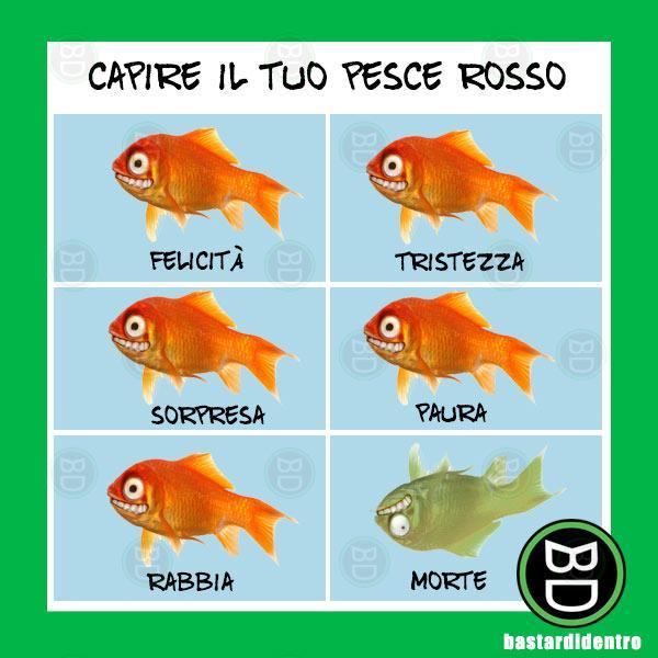 Capire il tuo pesce rosso