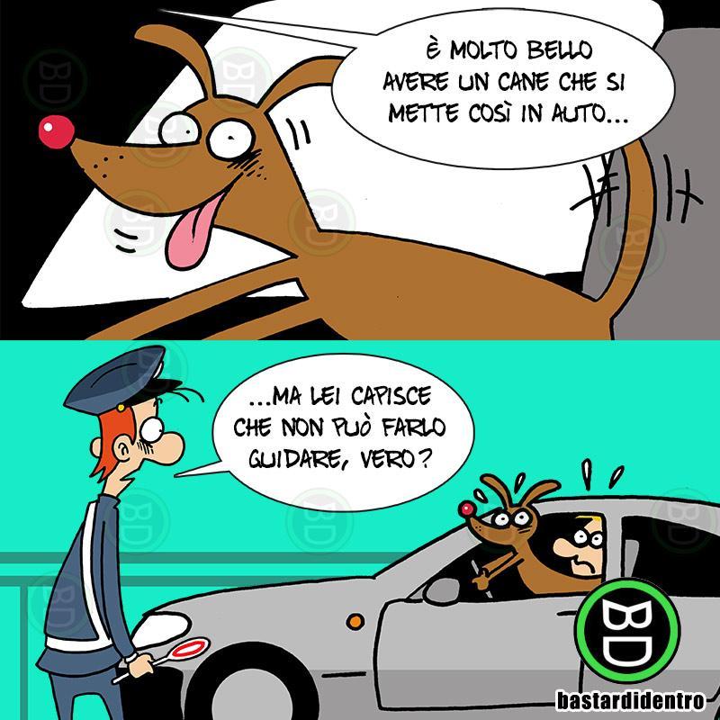 Cane al volante!