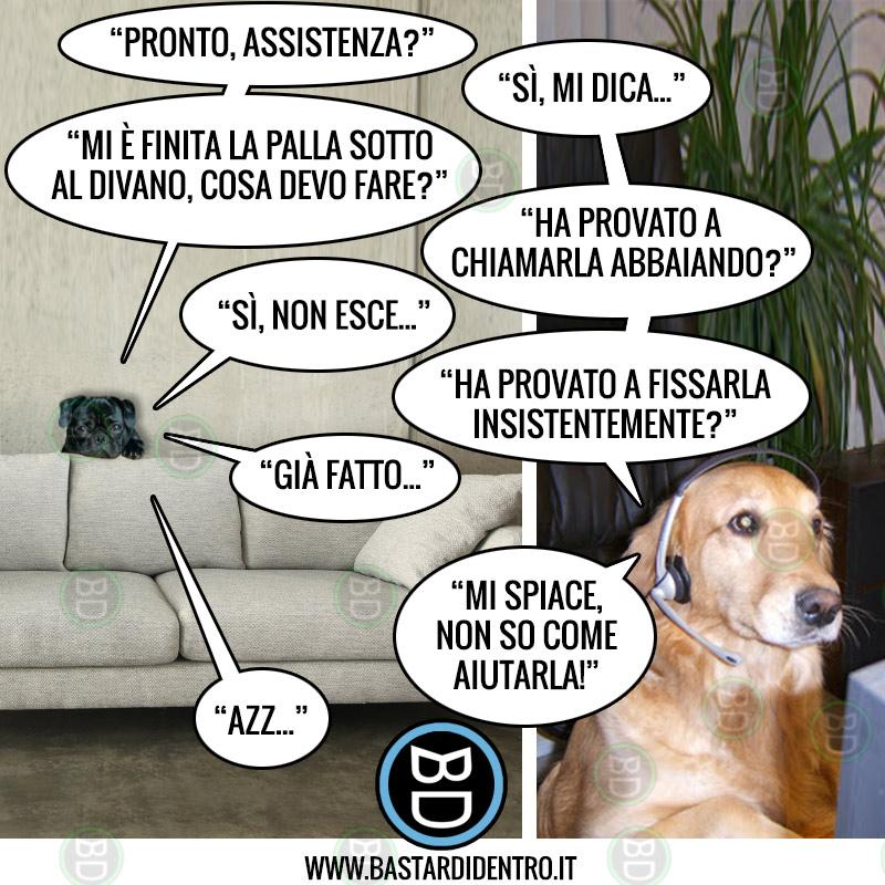 Servizio assistenza da cani!